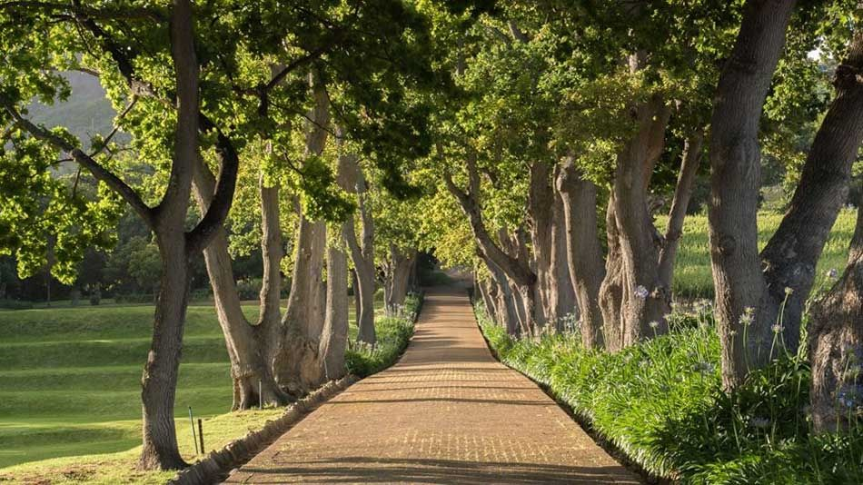 Visit Cape Town : Big 6 # 4 – Groot Constantia